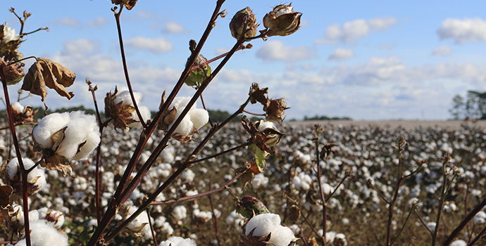 5 benefits of using organic cotton