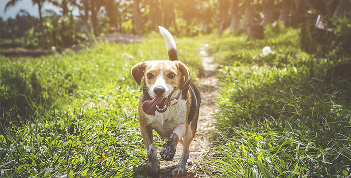 4 ways to be a green and eco-friendly pet owner