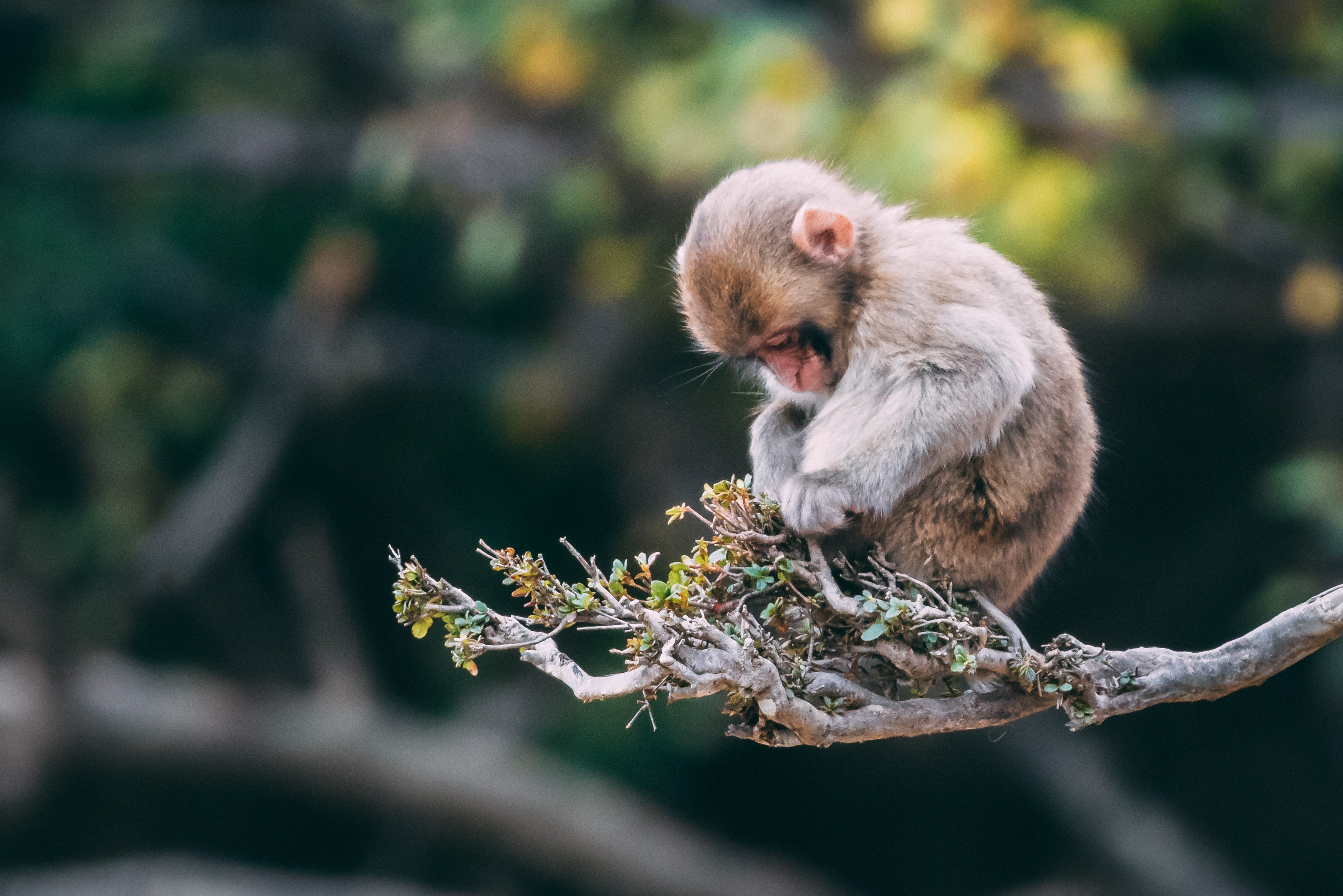 9 tips to help save wildlife