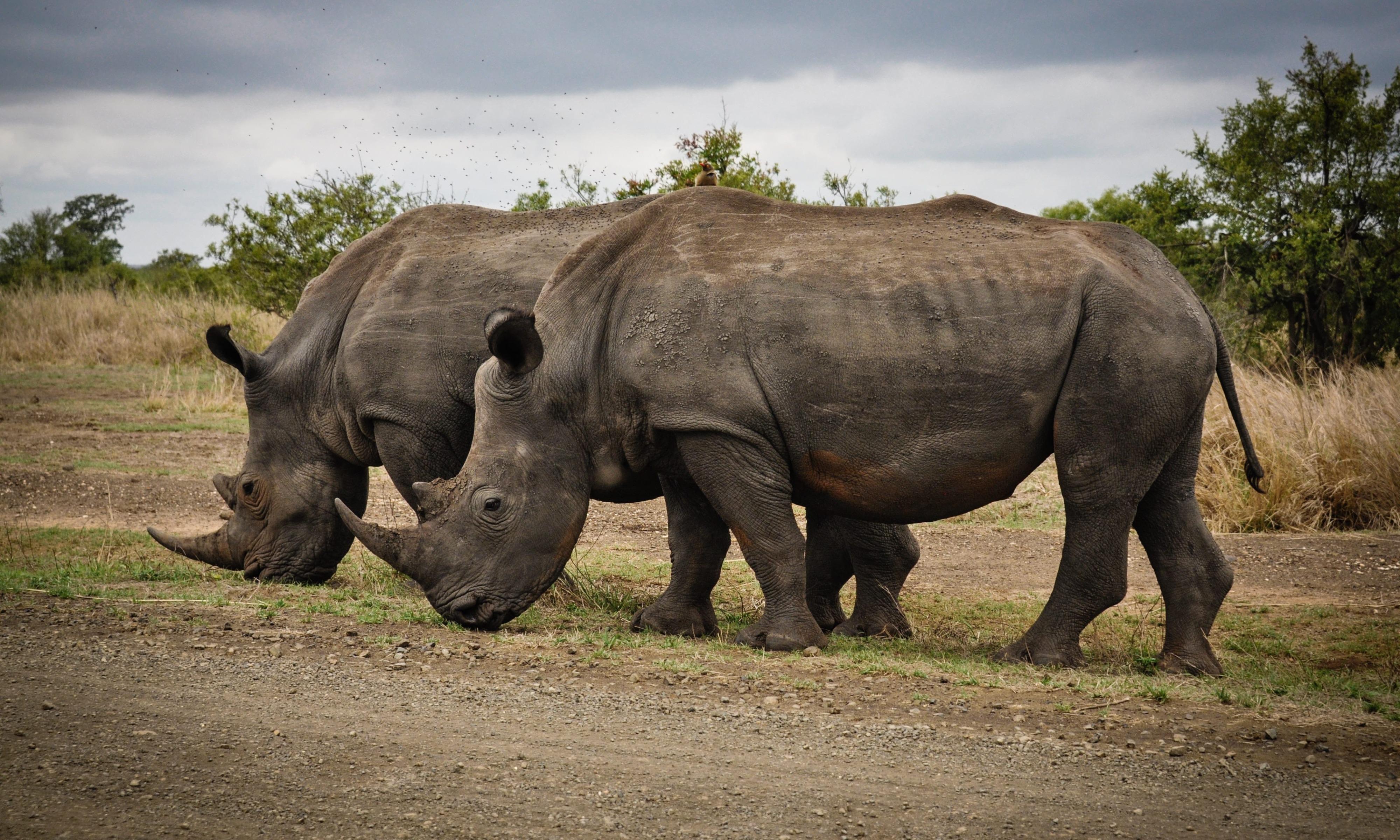 Tips for saving wildlife
